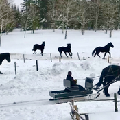 was a perfect day for a sleigh ride!!