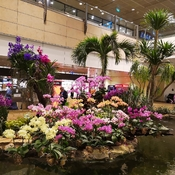 Awesome Singapore Changi airport