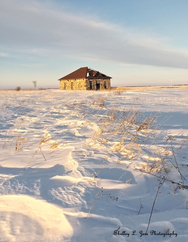 Winter Golden Glow Saskatchewan