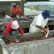 Cleaning Fish in Kalk Bay
