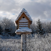 pretty bird house