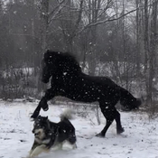 mya and shylo playin in the snow this morning