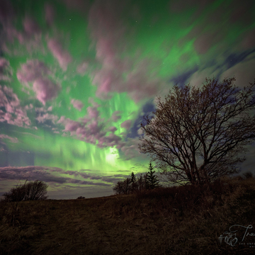 Lady Aurora Dancing over Melville Resevoir Calm Waters