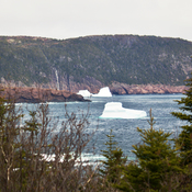 A few pics from Cape Spear this morning...