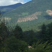 Mountain forest at Balfour, BC in West Kootenay is changing rapidly.