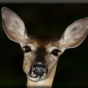 Well hello human!... doe.