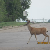 Deer Crossing 1 Ave in Bassano, AB