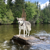 Huskimo Gone swimming