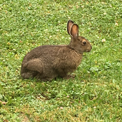 A fletcher lake lodge bunny