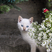 Baby kittens and flowers