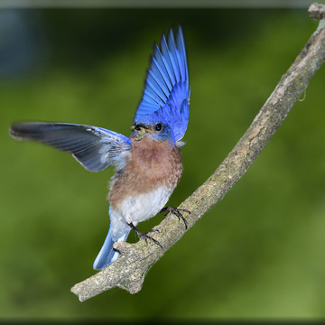 Moment Bluebird lands with Caterpillar!