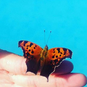 Butterfly by the pool