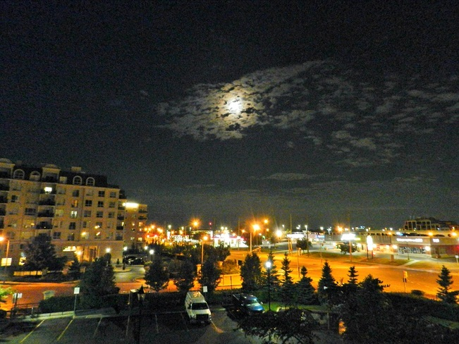 Midnight Moon Vaughan, ON