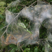 web cocoons