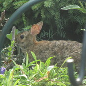 hiding in the rockery