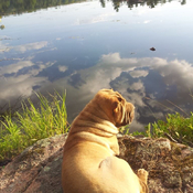 Winston overlooking Lovesick Lake in the beautiful Kawartha's