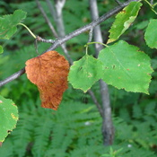 Colorful Orangy Leaf