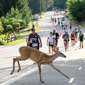 """Run Like a Deer"""