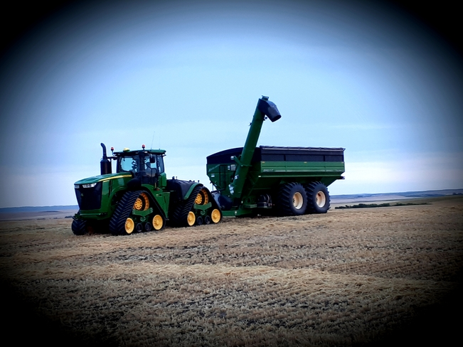 Grain Carting Harvest ready Starland No. 47, AB