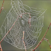 Web, Elliot Lake.