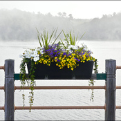 Flower box, Elliot Lake.