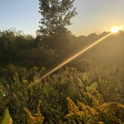 Sunset over golden rod.