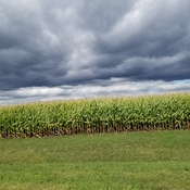 clouds rolling over the corn