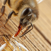 How to feed a bee