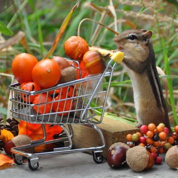 Chippie stocks up for Thanksgiving.