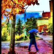 Autumn Leaves and RAIN !