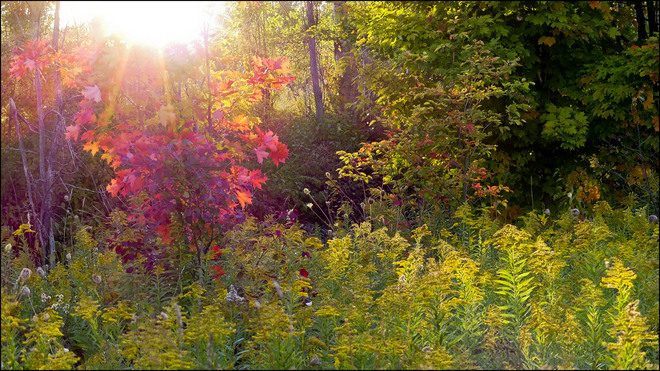 Evening sun, Elliot Lake.