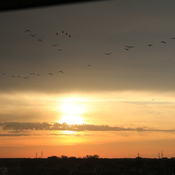 Geese and Sunrise