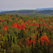 Fall Colours from Mt.McRae in the Nor'Wester Mountains