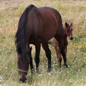 Young foal with mother