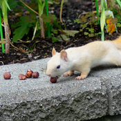 Our White Squirrel