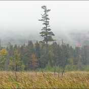 Foggy and wet, Elliot Lake.