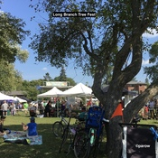 A festival for trees in Toronto on this steamy hot Sept. 22 day