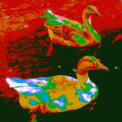 geese with effects