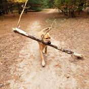 No stick is too big!!