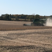 Beautiful Weather for Soybean Harvesting