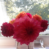 Oct. 13, 2019...Last bunch of Dahlia's picked from the garden....