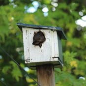 Nobody told the squirrel this is a bird house
