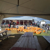 Oct. 14, 2019....Apple farm ready to sell apples and pumpkins