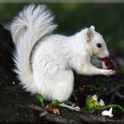 White Squirrel Portrait!