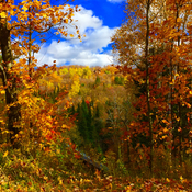Fall in the Laurentian
