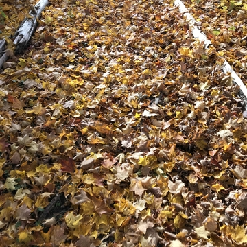 Glad I don't have to rake this...