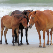 Wild horses day at the beach