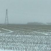 Fog on the Prairies