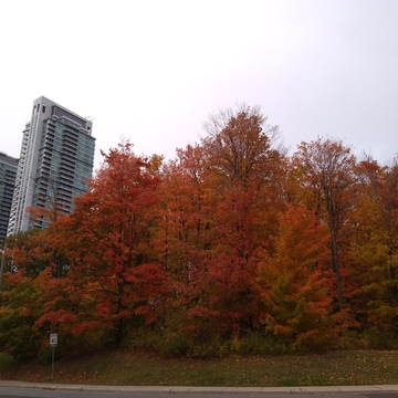 Colour of Fall in Scarborough