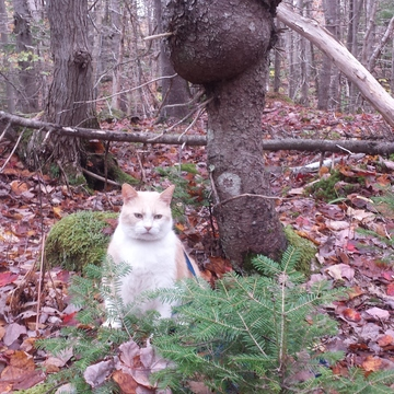 Cougar Kat is so rustic in the primordial woods.